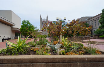 Lowry Mall Container Garden Photo