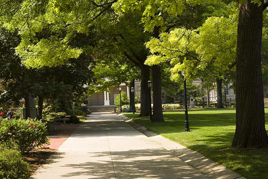 The walk around the Quad is lined with Pin Oaks (Quercus palustris) planted to replace the American Elms (Ulmus americana) that died in the 1940's.